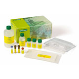 Bio-Plex Pro Human Cytokine 27-plex Assay #M50-0KCAF0Y