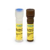 Bio-Plex Pro Human Chemokine Fractalkine / CX3CL1