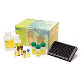 Bio-Plex Pro™ Human Treg Cytokine Panel, 12-Plex
