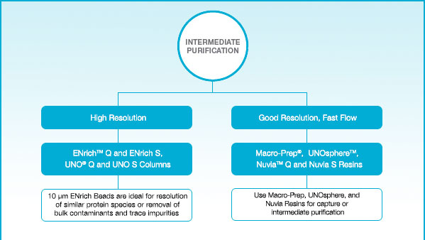 Column and Resin Selection Guide Intermediate Purification