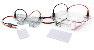 Horizontal Electrophoresis Systems | Life Science Research | Bio-Rad