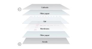 Nitrocellulose Paper