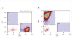 Two flow cytometry dot plot graphs displaying  green fluorescent protein and red fluorescent protein data points