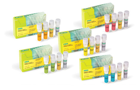 Antibody labeling kit - ReadiLink Antibody Labeling Kits