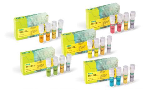 Antibody Labeling Kits