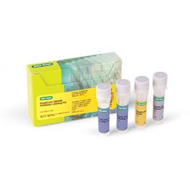 ReadiLink 405/454 Antibody Labeling Kit