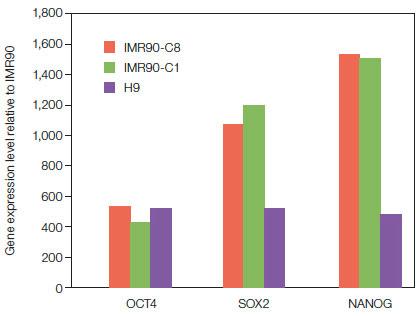 幹細胞研究 遺伝子の発現解析