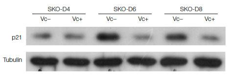 幹細胞研究 タンパク質の発現解析