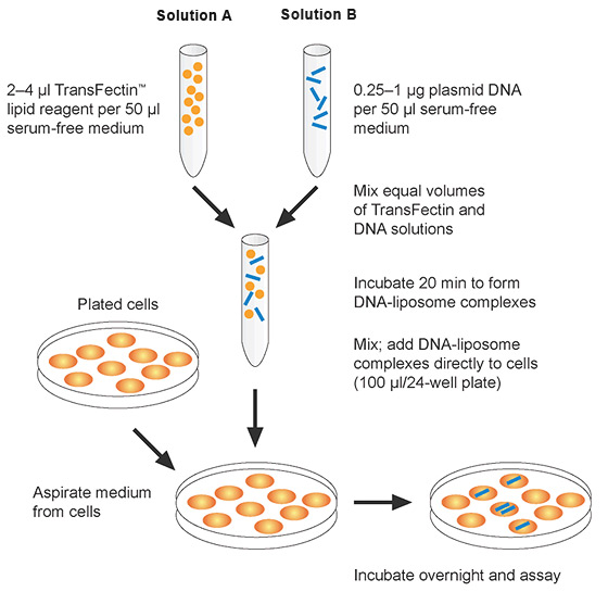 Chemical And Viral Based Transfection Methods Lsr Bio Rad
