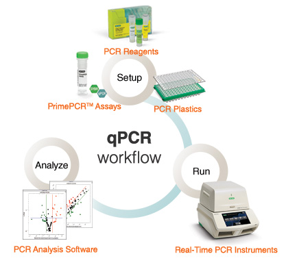 What is Real-Time PCR (qPCR)? | LSR | Bio-Rad