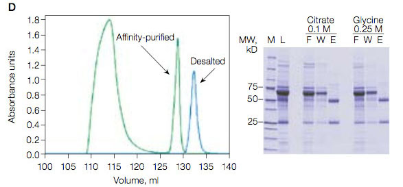 Protein A affinity purification profiles using 0.25 M glycine elution buffer